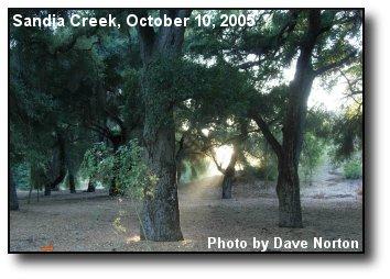 Oak Stream