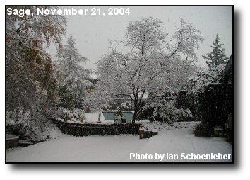 Sage Snowfall