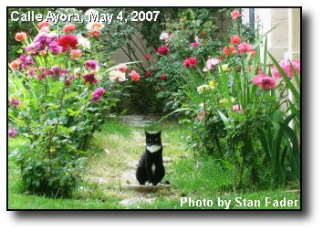 Feline on Guard