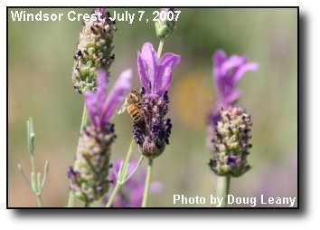 Pollen Harvest